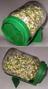 A sprouting glass jar with mung beans sprouting in it.